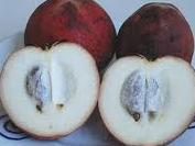 Velvet Apple VelvetApple in Malaysia